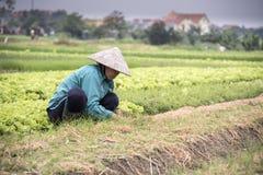 Agricoltore vietnamita sul lavoro Immagine Stock