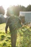 Agricoltore Walking e portare un grande pacco del Le appena raccolto Immagine Stock