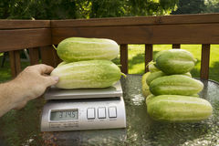 Agricoltore Weighing Produce On una scala Fotografia Stock