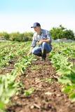 Agricoltore Working nel campo Fotografia Stock