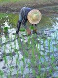Agricoltore Working nel campo Immagine Stock Libera da Diritti