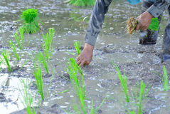 Agricoltore Working nel campo Fotografia Stock Libera da Diritti