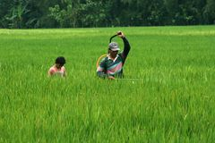 Agricoltori Fotografia Stock Libera da Diritti
