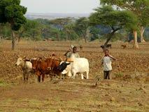 Agricoltori africani che lavorano al campo Immagine Stock Libera da Diritti
