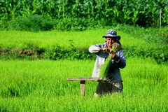 Agricoltori, agricoltori dalla Tailandia Immagini Stock Libere da Diritti
