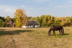 Agricoltori anziani e cavallo della casa che pascono in un prato Fotografia Stock