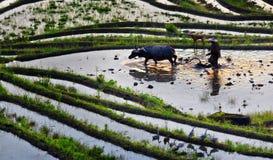 Agricoltori arabili Immagini Stock