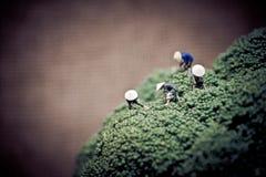 Agricoltori asiatici che raccolgono i broccoli Tono di colore sintonizzato Immagini Stock