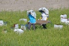 Agricoltori asiatici che raccolgono i raccolti Immagine Stock