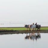 Agricoltori birmani Fotografie Stock