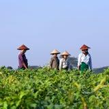 Agricoltori birmani Immagini Stock Libere da Diritti