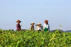 Agricoltori birmani Fotografie Stock Libere da Diritti