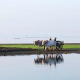 Agricoltori birmani Immagine Stock