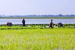 Agricoltori birmani Fotografia Stock