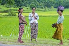 Agricoltori birmani ad un giacimento del riso Fotografie Stock