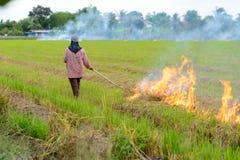 Agricoltori brucianti della stoppia della paglia quando il raccolto è completo Fotografia Stock