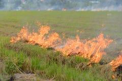 Agricoltori brucianti della stoppia della paglia quando il raccolto è completo Immagini Stock