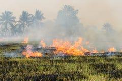 Agricoltori brucianti della stoppia della paglia quando il raccolto è completo Immagini Stock Libere da Diritti