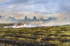 Agricoltori brucianti della stoppia della paglia quando il raccolto è completo Immagine Stock