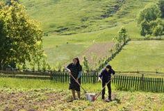 Agricoltori in Bucovina Fotografie Stock