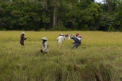 Agricoltori cambogiani che lavorano ai campi fotografia stock