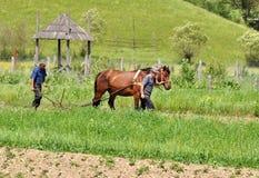 Agricoltori che arano con il cavallo Fotografie Stock
