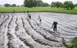 Agricoltori che arano le risaie Immagine Stock