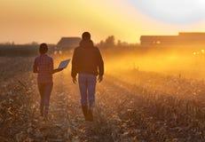Agricoltori che camminano sul campo durante l'imballaggio Immagine Stock Libera da Diritti