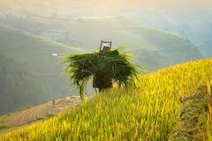 Agricoltori che continuano la sua erba Fotografia Stock
