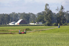Agricoltori che costruiscono l'impianto di irrigazione Fotografie Stock