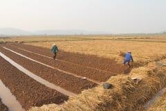 Agricoltori che crescente le verdure Immagine Stock