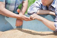 Agricoltori che esaminano il grano del grano Immagine Stock