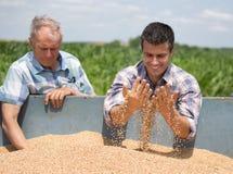 Agricoltori che esaminano il grano del grano Fotografia Stock Libera da Diritti