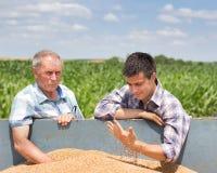 Agricoltori che esaminano il grano del grano Fotografie Stock Libere da Diritti