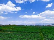 Agricoltori che fanno il lavoro dell'azienda agricola nel campo Fotografie Stock