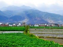 Agricoltori che fanno il lavoro dell'azienda agricola nel campo Immagine Stock