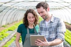 Agricoltori che guardano lo stats sulla compressa Fotografia Stock