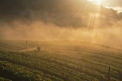 Agricoltori che innaffiano fragola Immagine Stock Libera da Diritti
