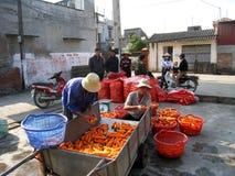 Agricoltori che lavano e carota di classificazione dopo il raccolto Fotografie Stock