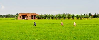 Agricoltori che lavorano al campo in Chaudok, Vietnam Fotografie Stock