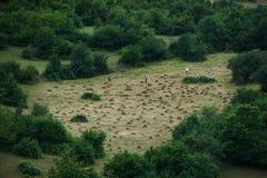 Agricoltori che lavorano al campo del terreno coltivabile Fotografia Stock