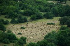 Agricoltori che lavorano al campo del terreno coltivabile Immagine Stock