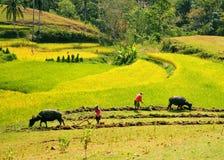 Agricoltori che lavorano al giacimento del riso Fotografia Stock