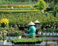 Agricoltori che lavorano al giacimento di fiore in Ben Tre, Vietnam Fotografia Stock