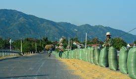 Agricoltori che lavorano alla via in Binh Dinh, Vietnam Immagine Stock