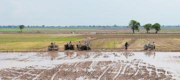 Agricoltori che lavorano alle risaie in Tinh Bien, Vietnam Fotografia Stock Libera da Diritti