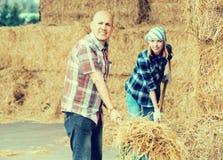 Agricoltori che lavorano con il fieno in granaio Immagini Stock Libere da Diritti