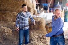 Agricoltori che lavorano con le forche Immagine Stock