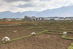 Agricoltori che lavorano nei campi in Heqing nel Yunnan Fotografia Stock Libera da Diritti