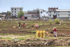 Agricoltori che lavorano nei campi in Heqing nel Yunnan Immagine Stock
